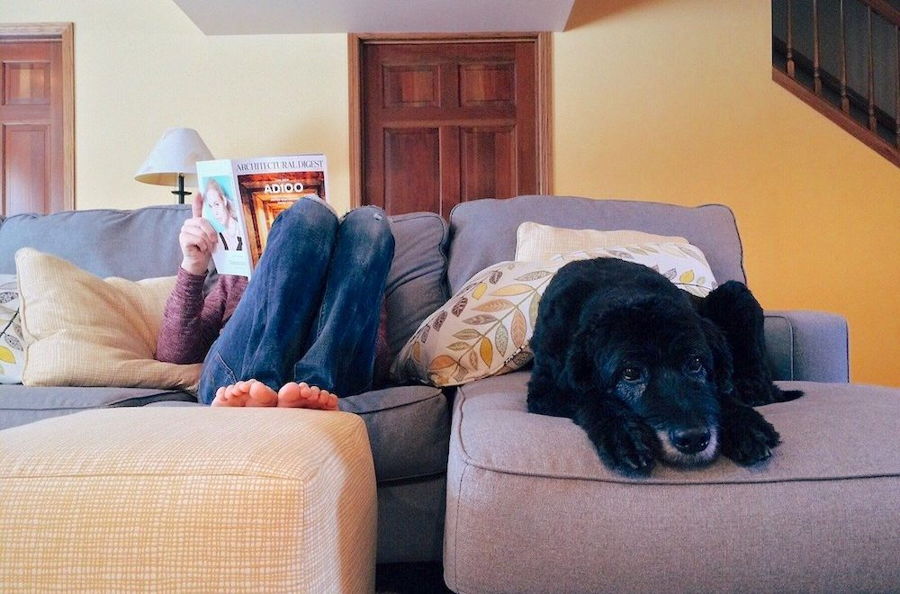 Person reading a magazine on sofa with a big dog
