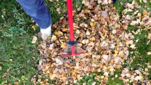 help neighbor rake leaves