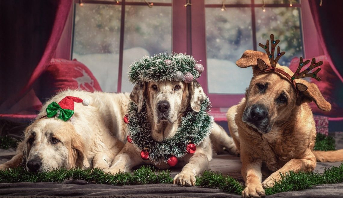 Three big dogs lying together all decked out for Christmas